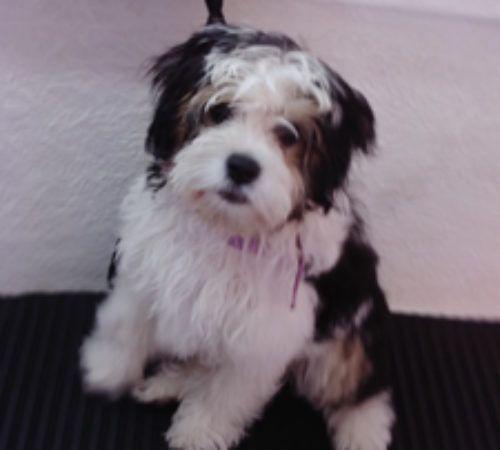 cute dog, puppy, cute puppy, puppy groom, dog grooming, puppy on a grooming table, dog on a grooming table