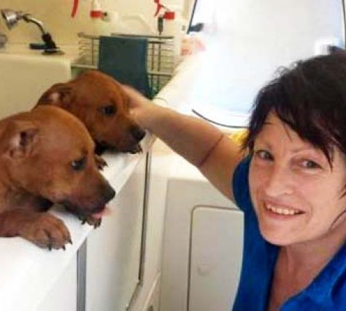mobile dog groomer petting puppies in a hydrobath, puppies in a hydrobath, mobile dog groomer, brown puppies, cute puppy, puppies in a tub, puppies being washed