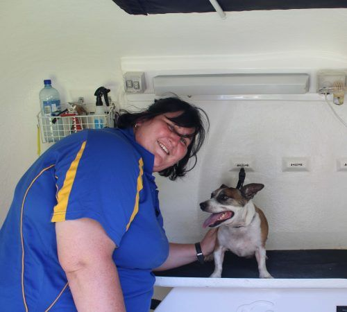 dog on a dog grooming table, dog groom, dog being groomed, dog groomer, mobile dog grooming trailer, mobile dog groomer, inside a grooming trailer, cute dog