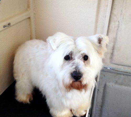 cute dog, dog, dogs, white dog, dog posing, small dog, dog groom
