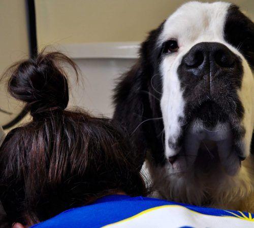 Dog Training Langwarrin