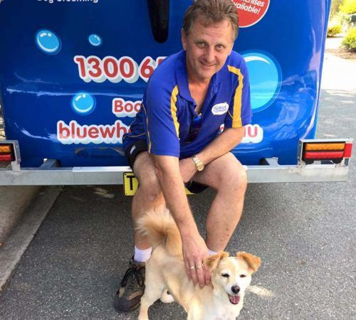 Mobile dog groomer professional dog wash banks groomer holding dog cute dog man holding dog blue wheelers logo dog solutioingenieria